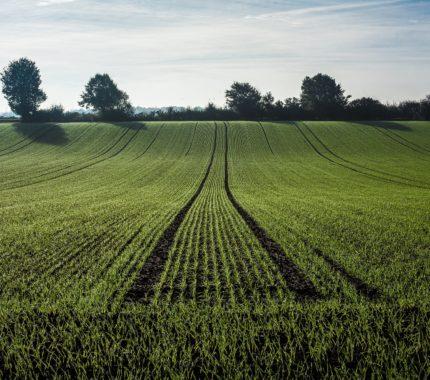 Economía verde y circular